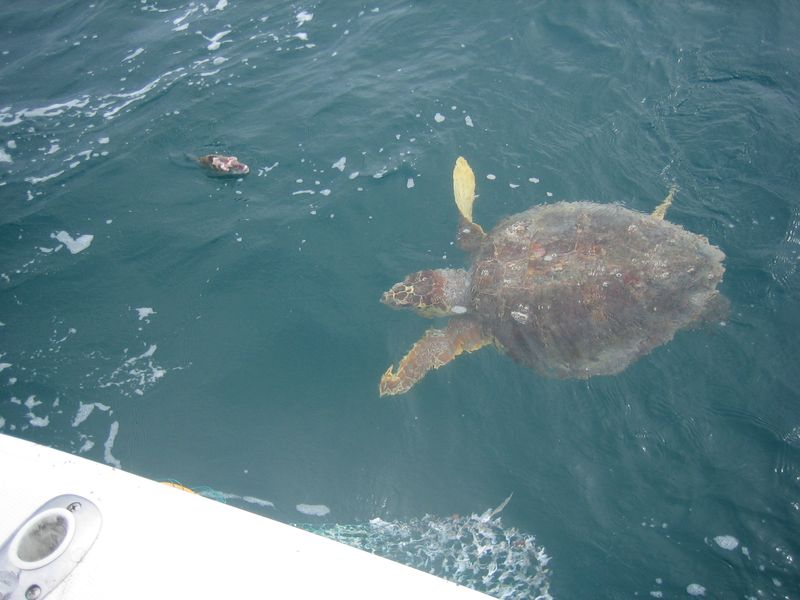 Florida Keys 2010 022
